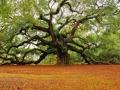 tree-groundedness